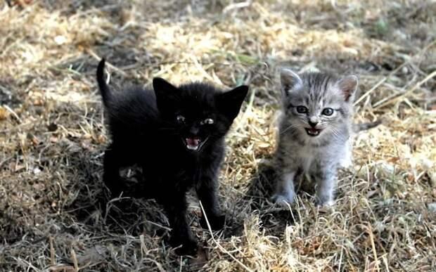 15 очень маленьких и очень злых котят, которые просто мечтаю кого-нибудь поцарапать