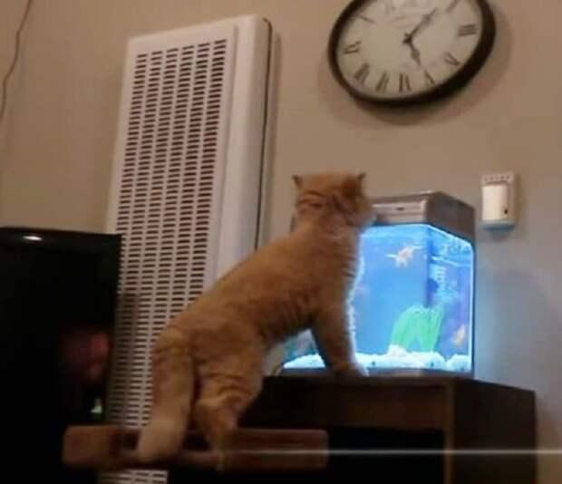 Кот и аквариум