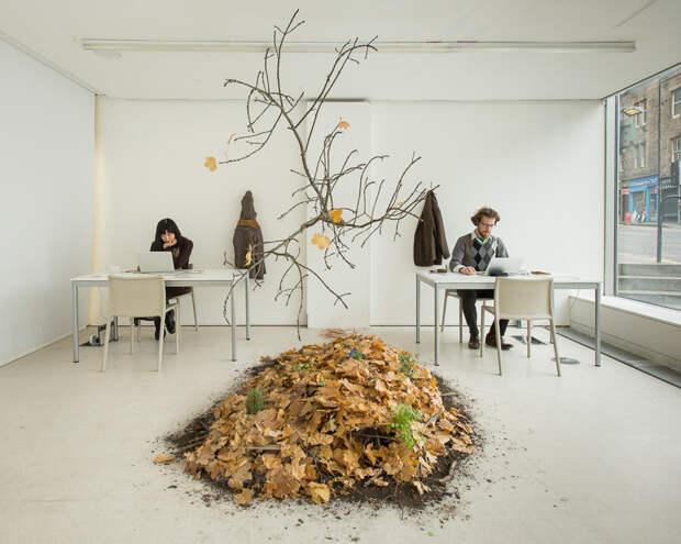 Уголок живой природы в офисе
