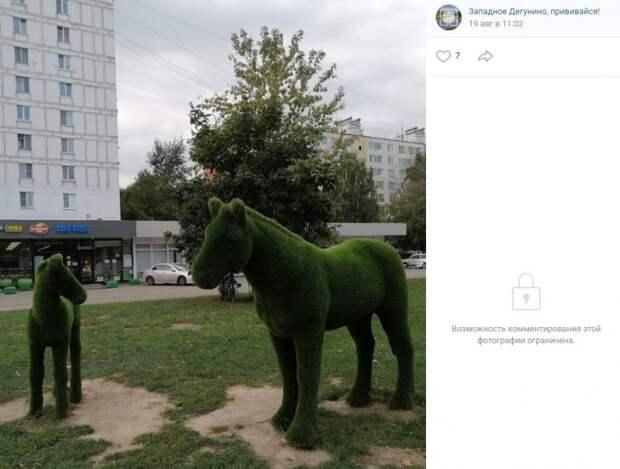Фото дня: кони стали достопримечательностью Западного Дегунина