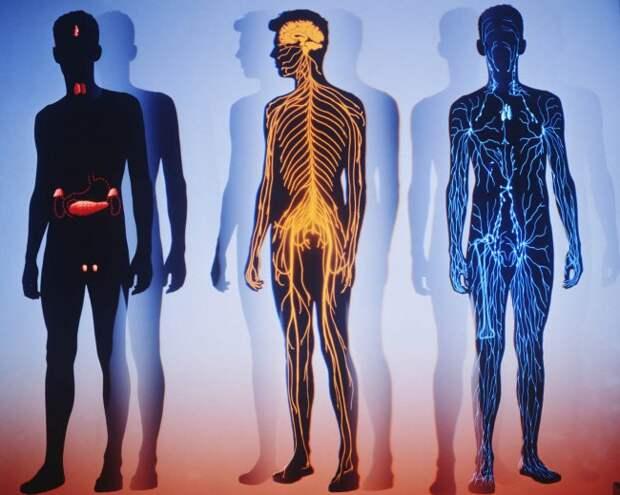 25+16 интересных фактов об организме человека