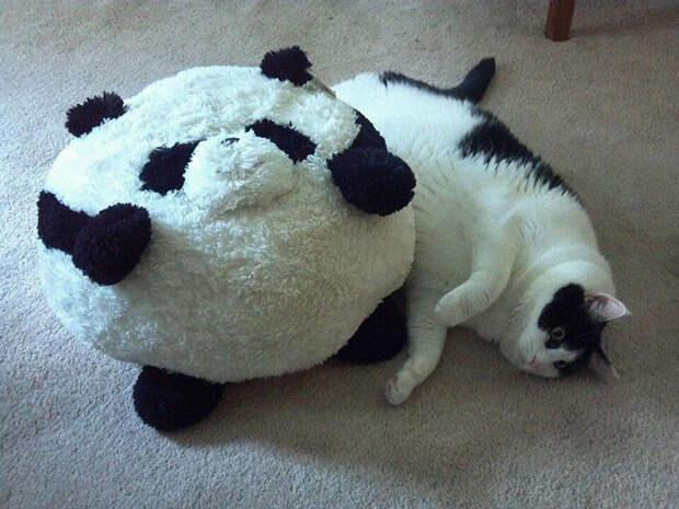 А это мой кумир! животные, коты, лишний вес, юмор