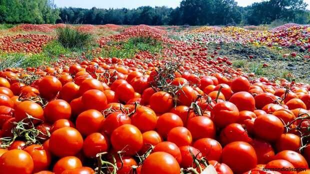 В ЕС тонны свежих овощей выбрасывают на свалку - лишь бы не отдавать бедным!