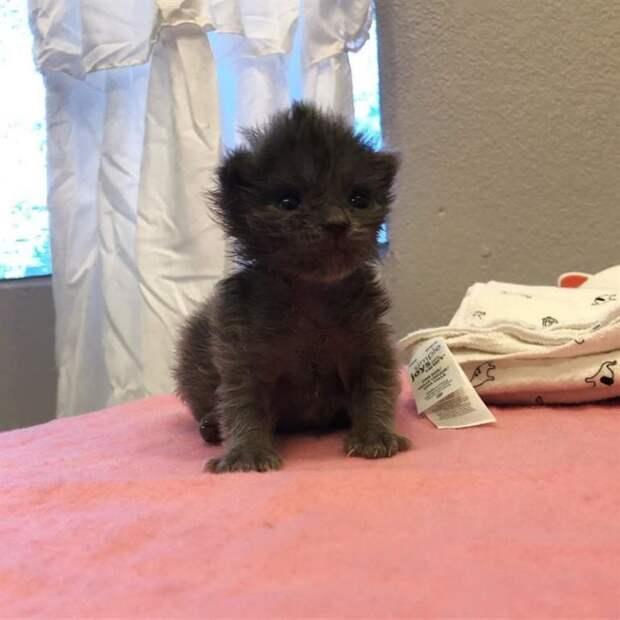 Трогательная история котенка с милым хохолком на голове