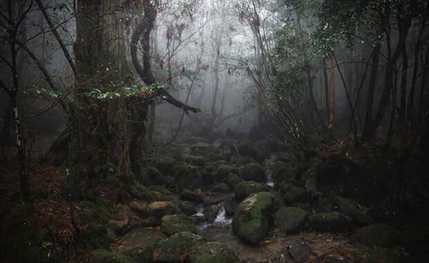 Самые древние леса планеты