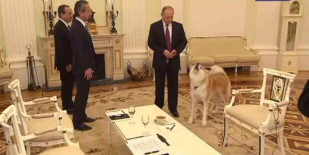 Японцам не понравился праздник на Курилах в честь окончания войны, и они хотят забрать у Путина собаку...