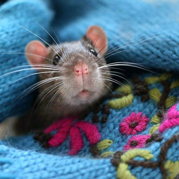 Заклинатель крыс