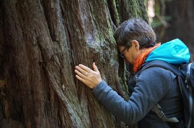 Пообщаться с лесом и спастись от стресса