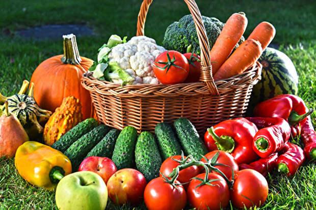 Лечебный урожай. Овощи с грядки помогут от многих недугов