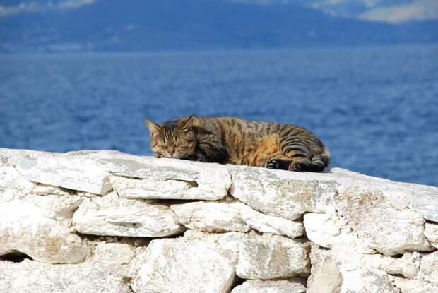 Морские котики)