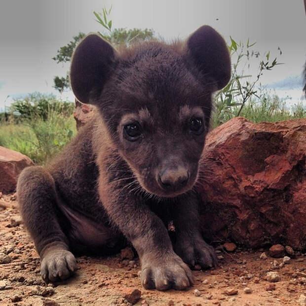 25+ фотографий детенышей диких животных, которые собрали в соцсетях больше лайков, чем щенята и котята