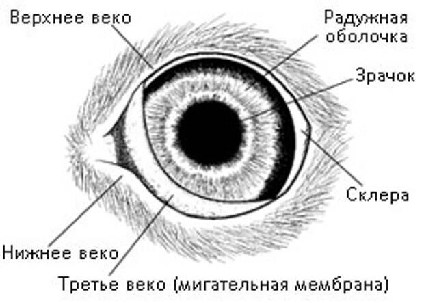 http://koshsps.ru/image/eye_add.jpg