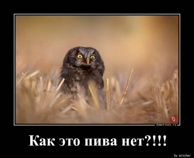 Demotions.ru - ДЕМОТИВАТОРЫ. » Страница 1109
