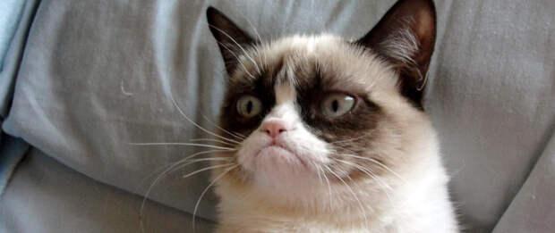 Grumpy Cat делает карьеру в Голливуде
