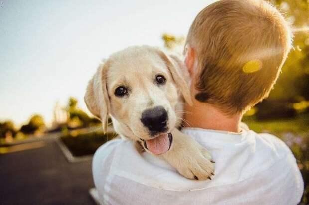 Взгляд из прошлого, который терзал сердце. Мальчик отдавал щенка на улице