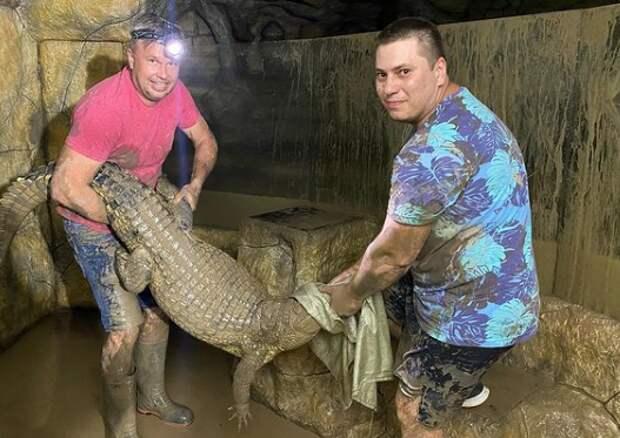 «Жменя крокодилов» в Ялте ещё плавает на свободе в затопленном зверинце. Как их ловят - смотрите на видео