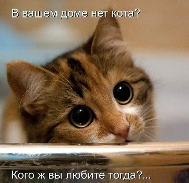 Ни дня без улыбки....))) И снова эти милые котейки...