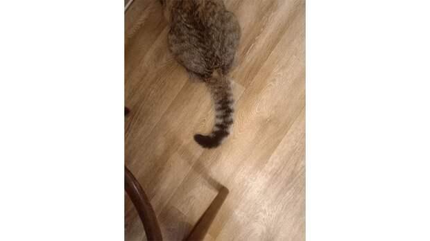 Дикая или домашняя: бабушка приютила кошку и напугала Сеть