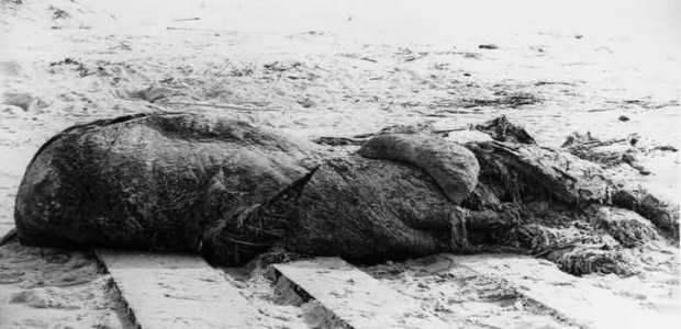 Существо, выброшенное на берег возле Сент-Огастина
