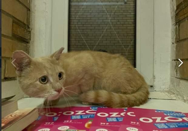 Фото дня: рыжий напуганный кот ждет хозяина на Большой Академической