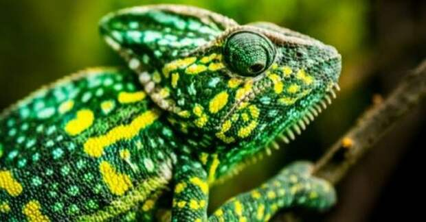 10 технологических преимуществ, которые животные стали использовать раньше, чем люди