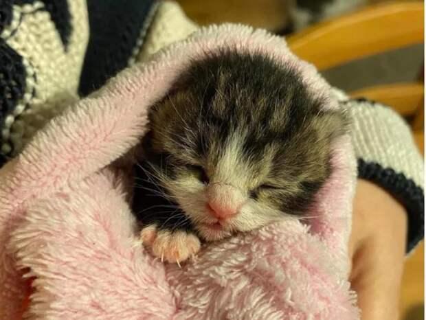 Драматическая история спасения кошки Гизель и её котенка Пруно