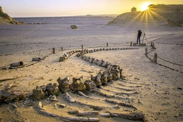 10 секретов пустыни Сахара, которые раскрыли современные археологи
