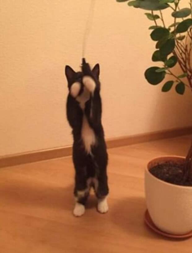 Могут ли бомжи любить котят? История Шопена, красивого мальчика в белых перчатках