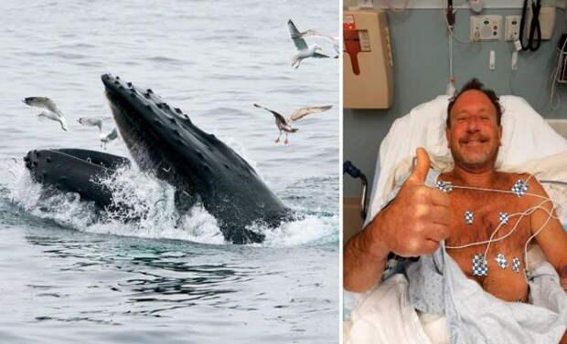 Ловец лобстеров выжил после того, как его проглотил кит