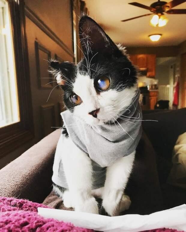 Женщине на крыльцо подбросили необычного котенка с огромными глазами