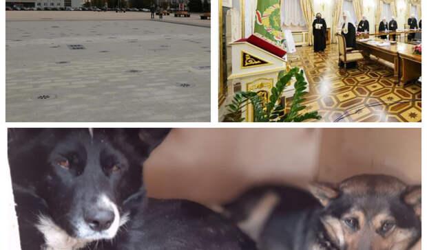 Закрытие фонтана, раскол в монастыре и изгнание собак: итоги дня в Удмуртии