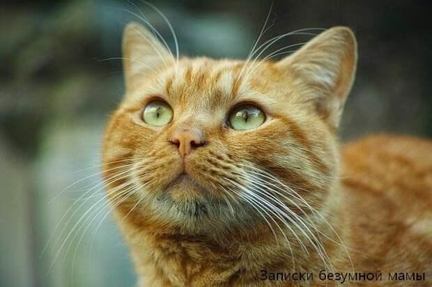 Ещё с нами жил кот, похожий на этого.) (фотобанк)