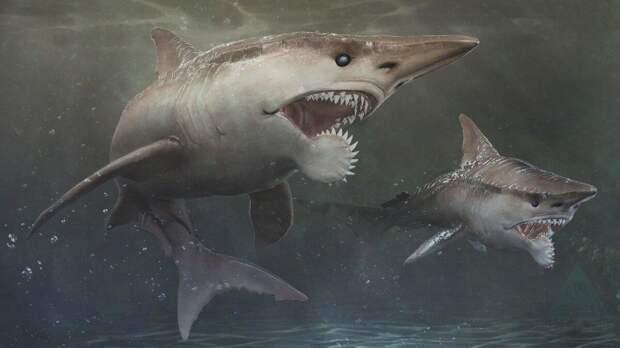 Кто тебя выдумал и что ты такое: акула, оснащённая циркулярной пилой