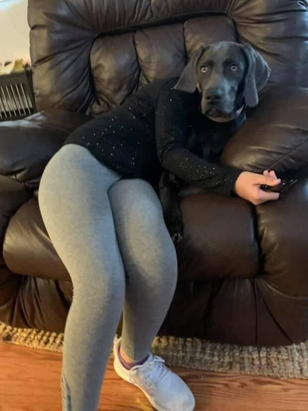 Оптическая иллюзия девушка-собака