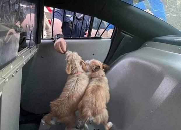 Собак подкармливают
