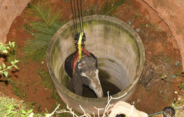 Спасение слона из глубокого колодца в Индии сняли на видео
