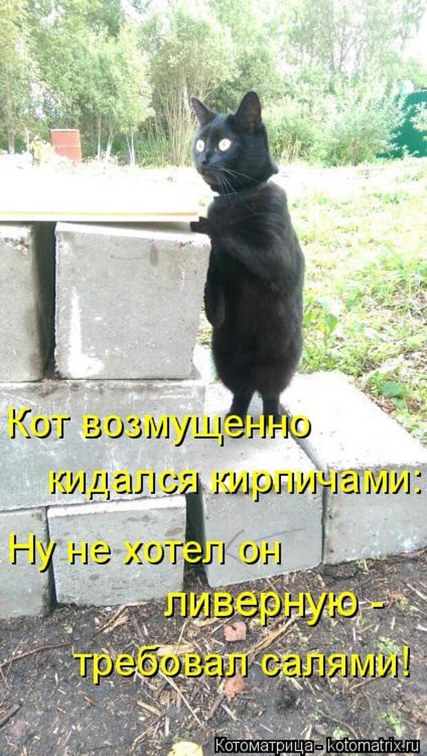 Свежая котоматрица (16 фото)