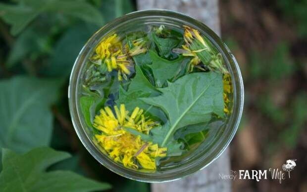7 мощных лечебных растений, которые вы можете вырастить сами