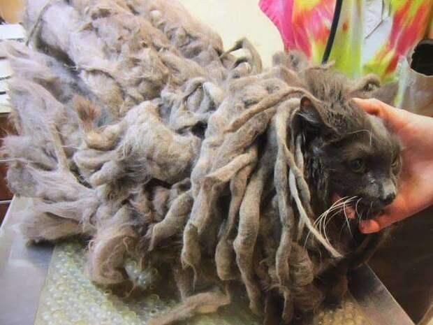 кот со спутанной шерстью
