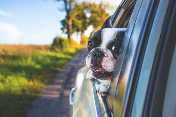 Управляемый собакой внедорожник врезался в музей в США