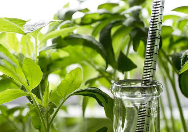 Применение регуляторов роста мобилизует естественные силы растения