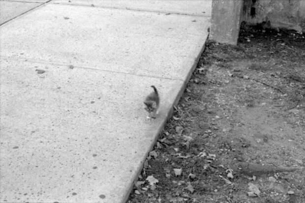 Маленький котенок подошел к скейтбордисту в поисках еды, а нашел любящего хозяина