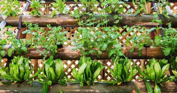 Как увеличить огород на пару соток