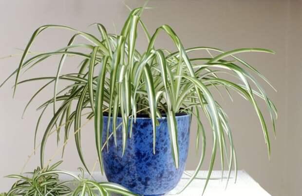 15 комнатных растений для самых ленивых из нас!