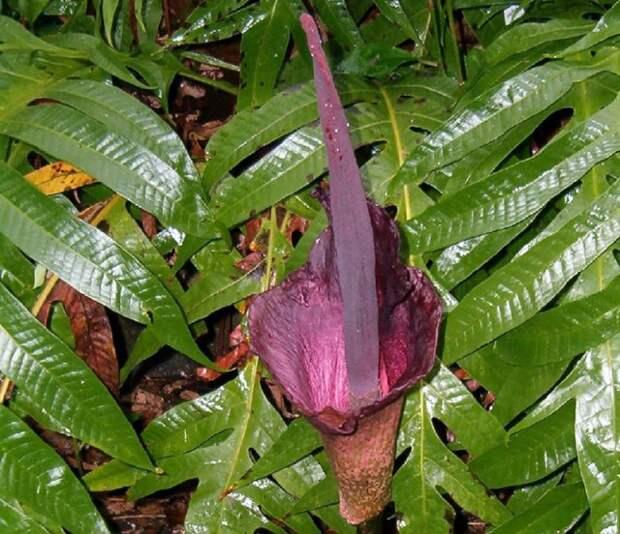растения цветы с неприятными названиями