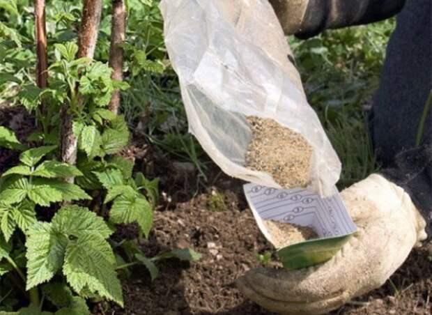 удобрение ремонтантной малины летом