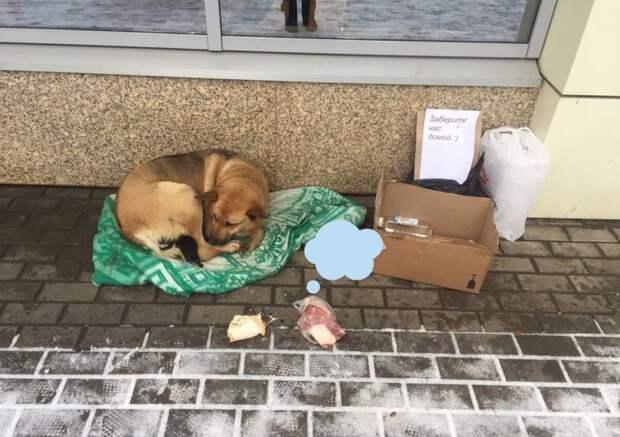 3 года назад у бездомного песика со щенками забрать отобрать одеяло