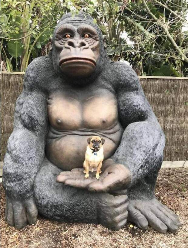 Без смеха не взглянешь: 10 фото животных, вовремя попавших в кадр