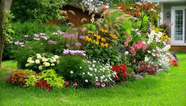 Растения на участке: как правильно их подобрать