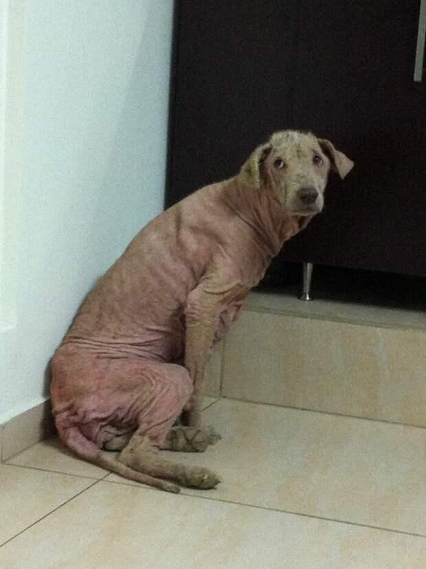 А другую Эйден в мире, голод, доброта, животные, люди, собака, спасение
